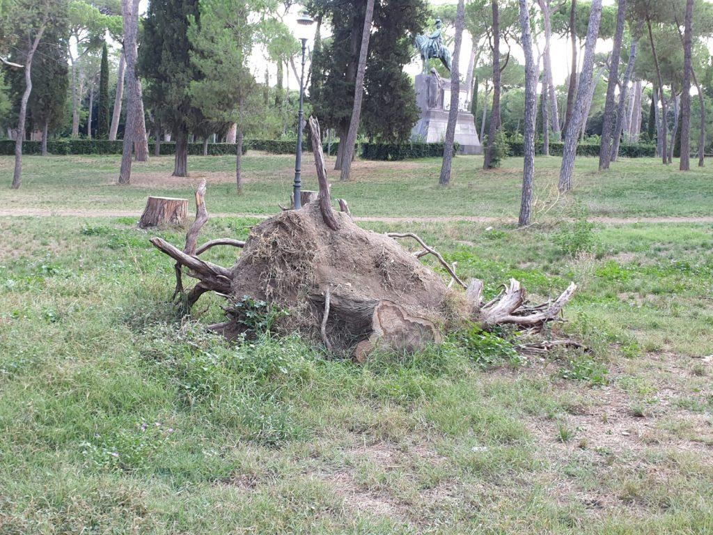 Tronchi e rami abbattuti appaiono come delle macabre sculture