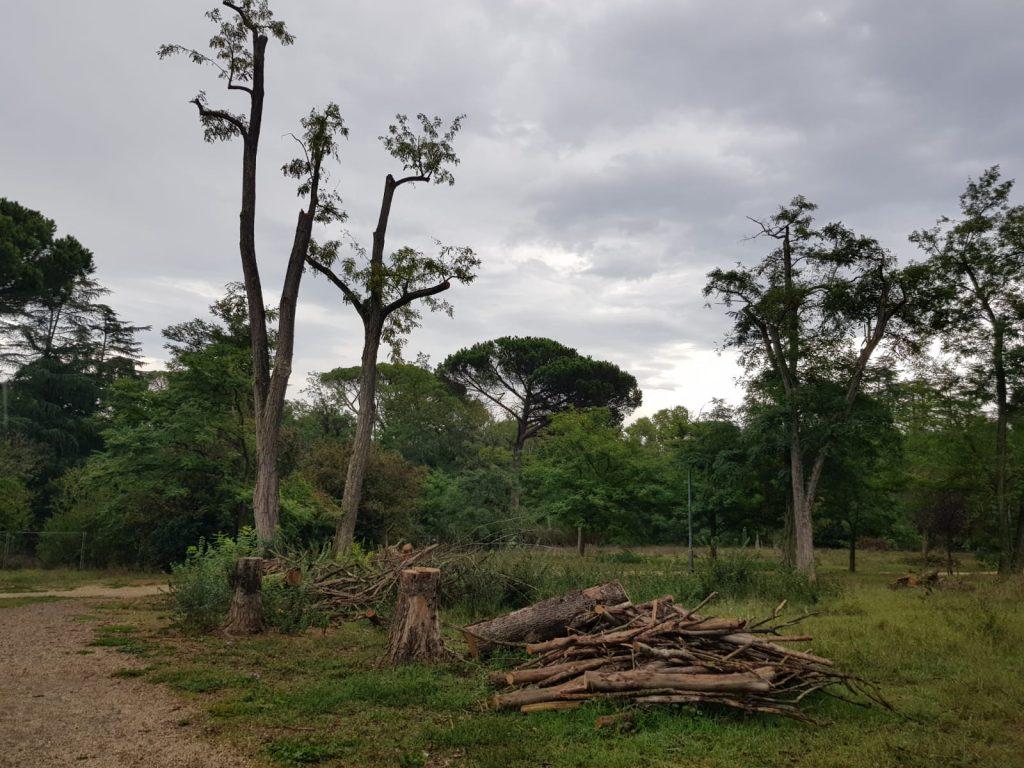 I tronchi accatastati al Parco Rabin