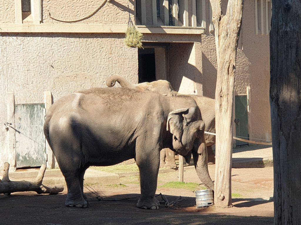 L'elefantessa Sofia (foto Facebook)