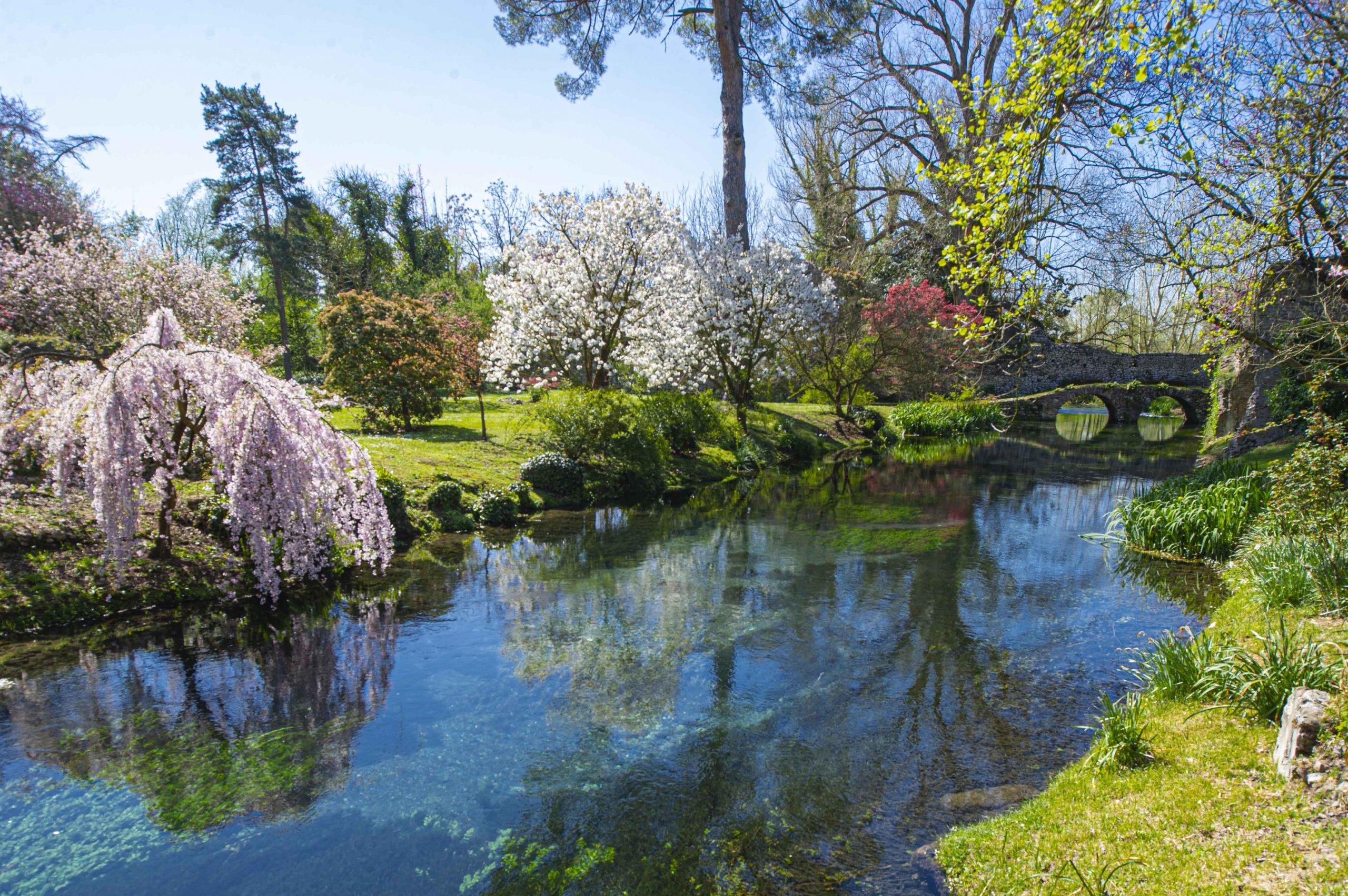 Fiume Ninfa, sul fondo Ponte a due luci a ridosso del muro di cinta, sulle sponde del fiume un ciliegio giapponese pendulo e due varietà di Pruni ornamentali.