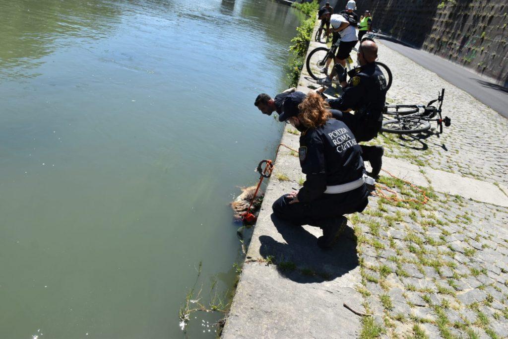 La polizia locale accanto alla carcassa del cane