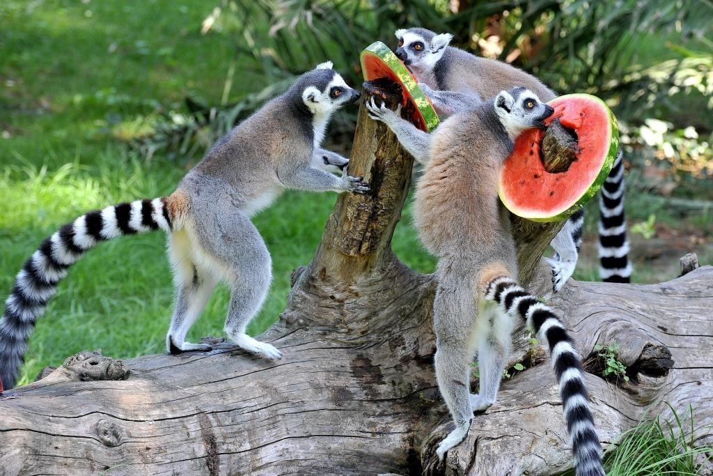 Animali al Bioparco