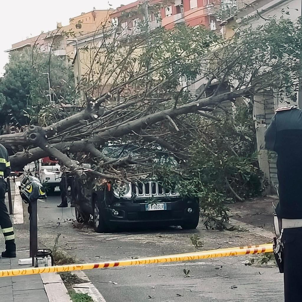 L'albero caduto in via del Pigneto