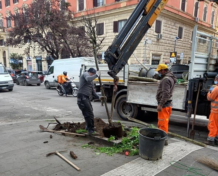 I lavori per la messa a dimora di nuovi alberi