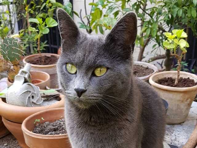 La gattina smarrita in zona Villa Massimo