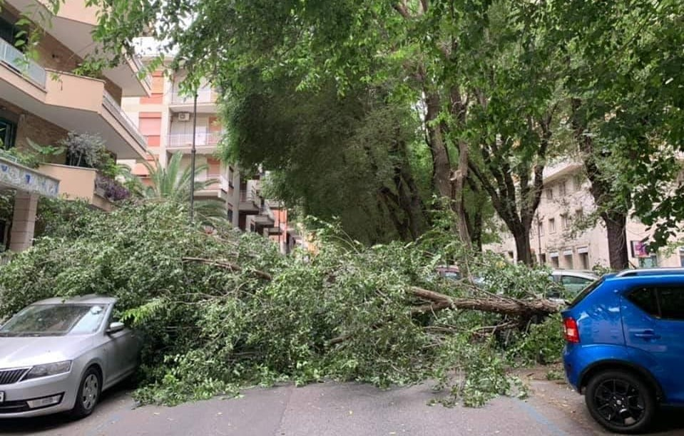 L'albero spezzato in viale Ippocrate. Foto dalla pagina Facebook Reporter Montesacro