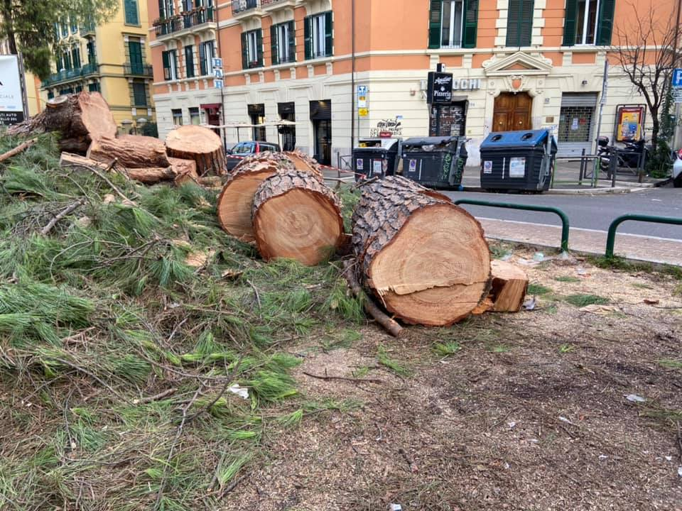 Albero abbattuto a corso Trieste - foto di Gennaio 2020