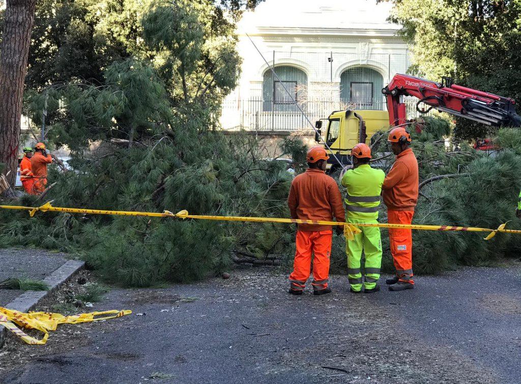 Gli interventi in via Prestinari per abbattere il pino pericolante