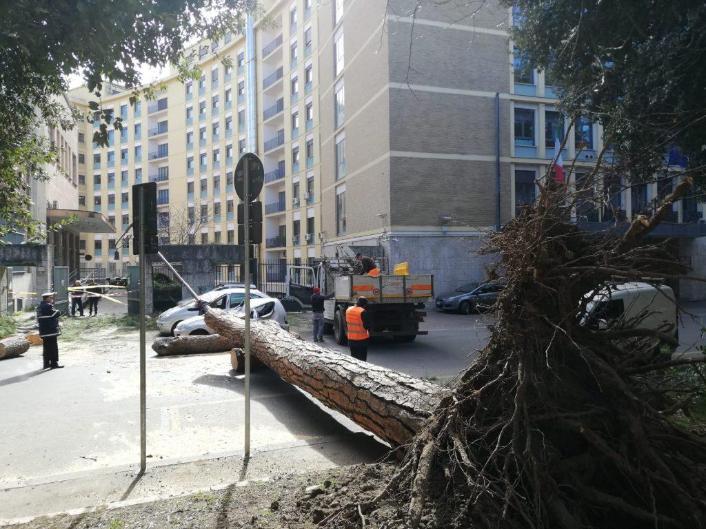 Le operazioni di rimozione del tronco crollato