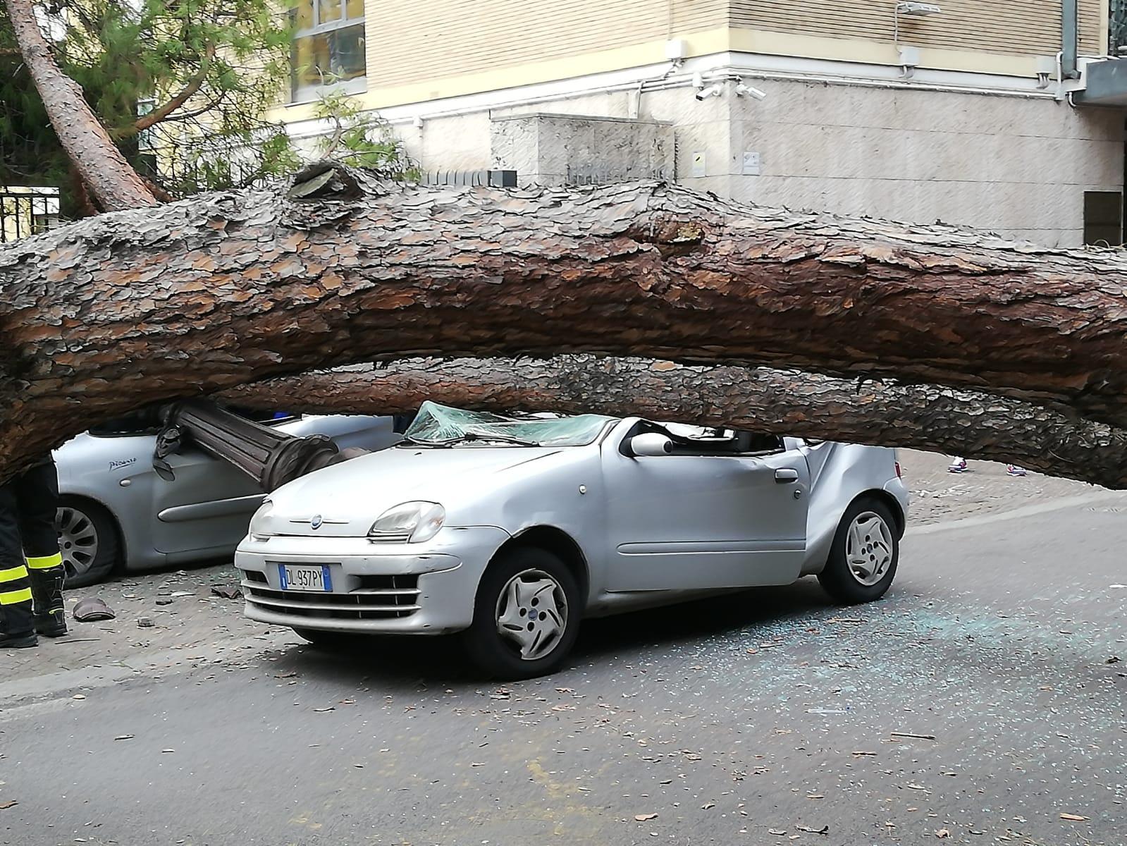 Una vettura schiacciata dal pino crollato in viale Mazzini
