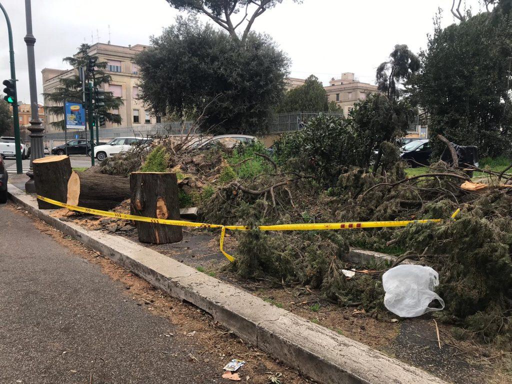 I resti degli alberi abbattuti a piazza Monte Grappa