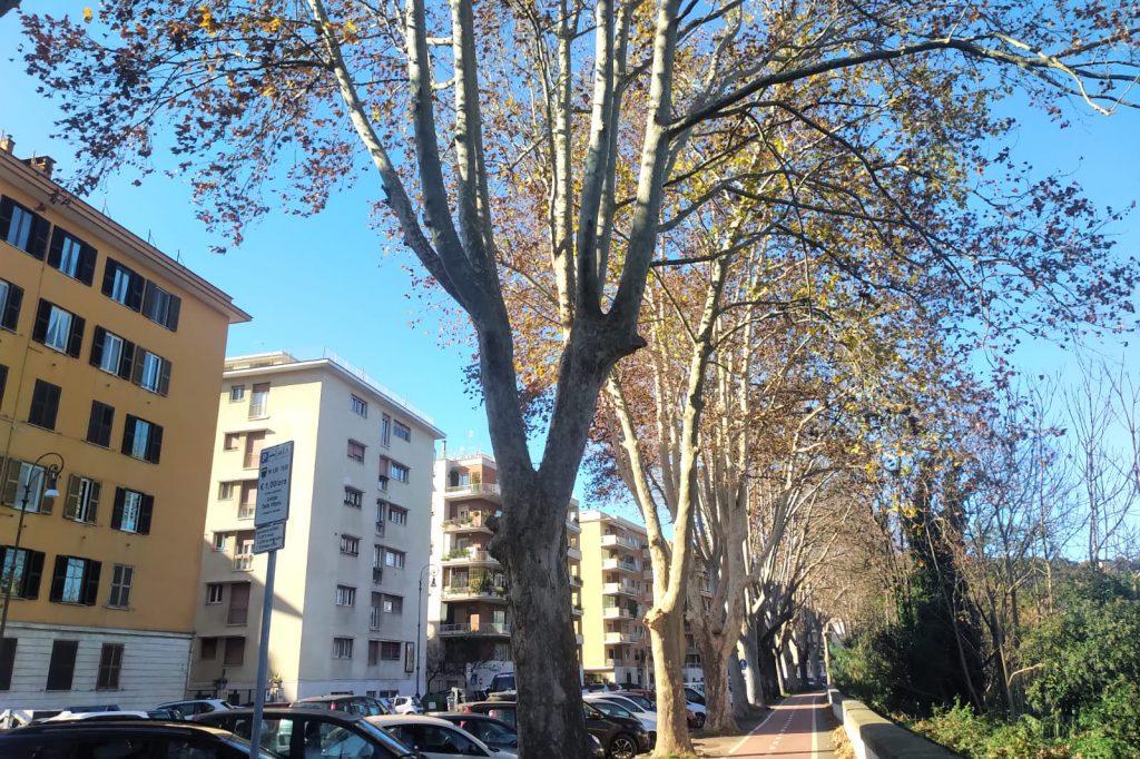 Gli alberi potati sulla ciclabile