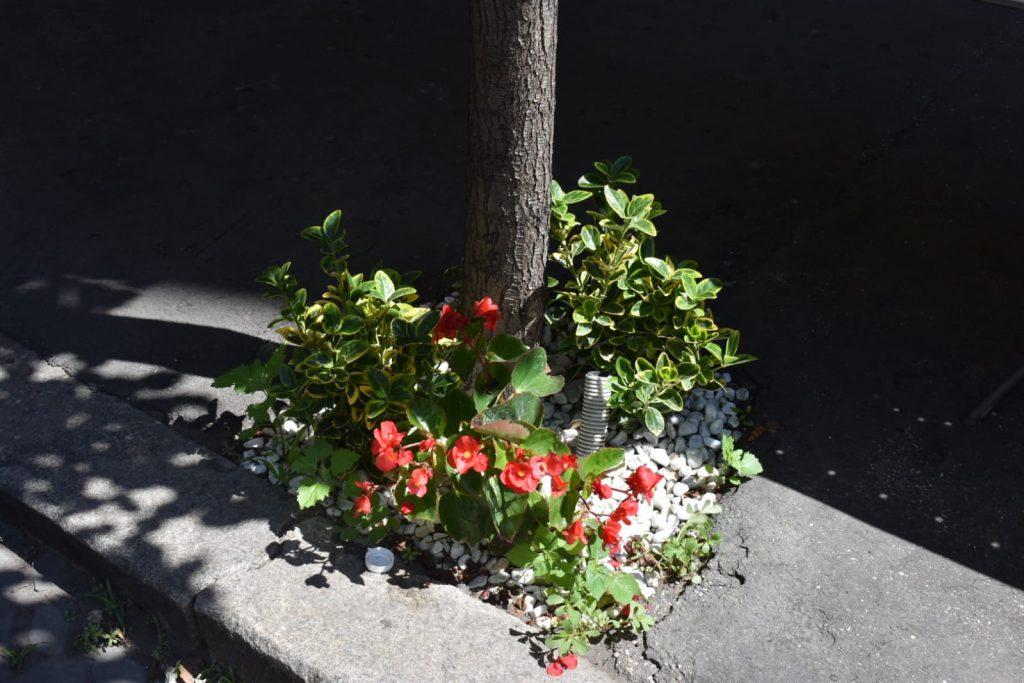 Anonimi cittadini decorano via Carlo Mirabello con fiori e piante