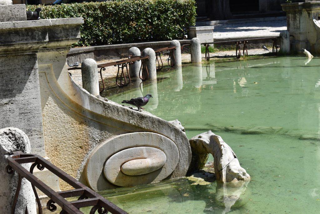 Un uccello si rinfresca nella fontana di piazza Mazzini