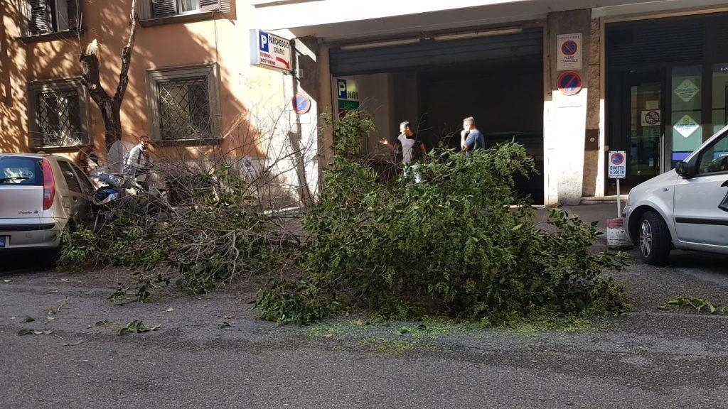 Un albero crollato in via dei Gracchi