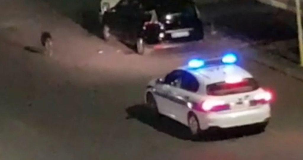 Il cinghiale seguito da una pattuglia della polizia locale in via Igea