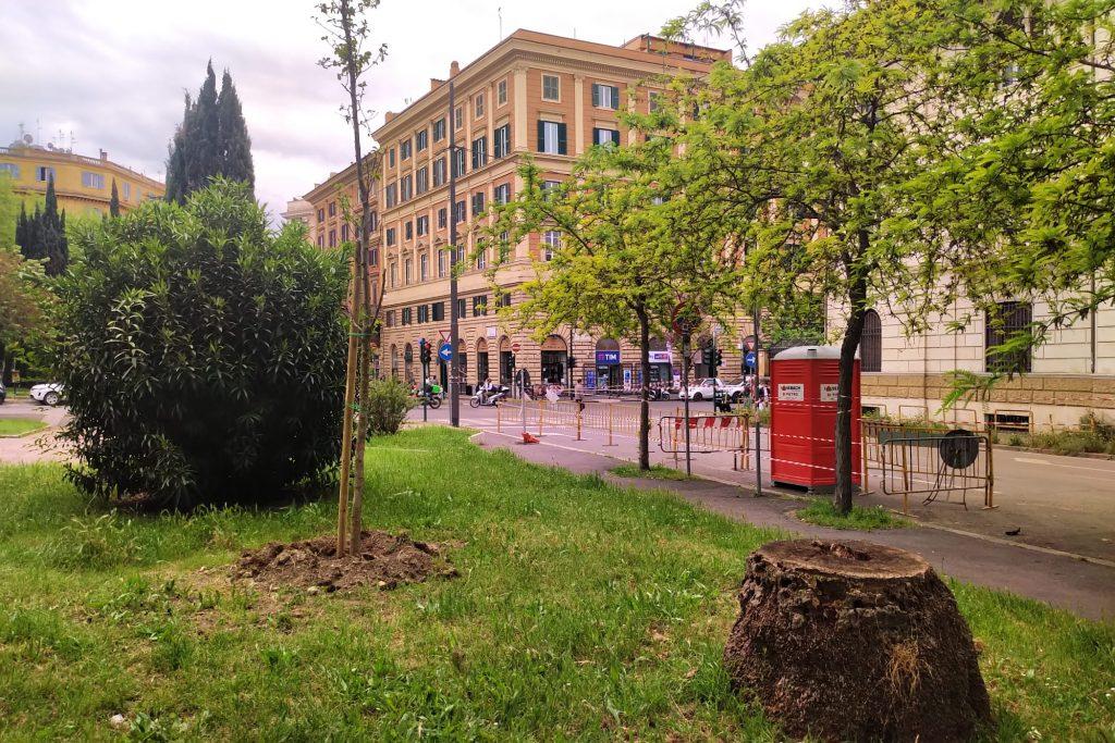 Nuovi alberi, e vecchi ceppi, in piazza della Libertà