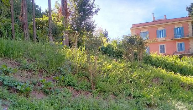 L'area verde dietro all'asilo Brontolo