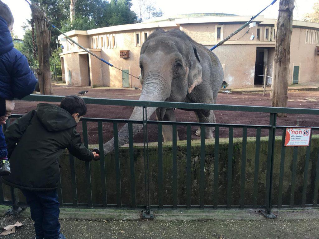 I bambini offrono le carote all'elefante Sofia
