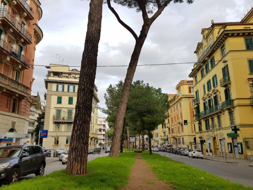 Secondo l'esperta, sono dodici gli alberi a rischio crollo a corso Trieste