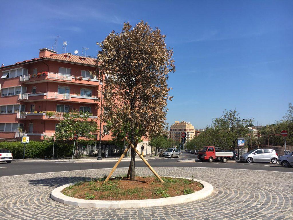 Le foglie dell'albero al centro della rotatoria completamente secche