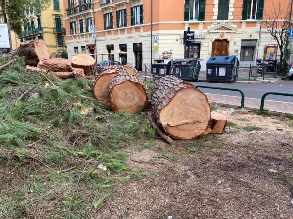 Albero abbattuto a corso Trieste