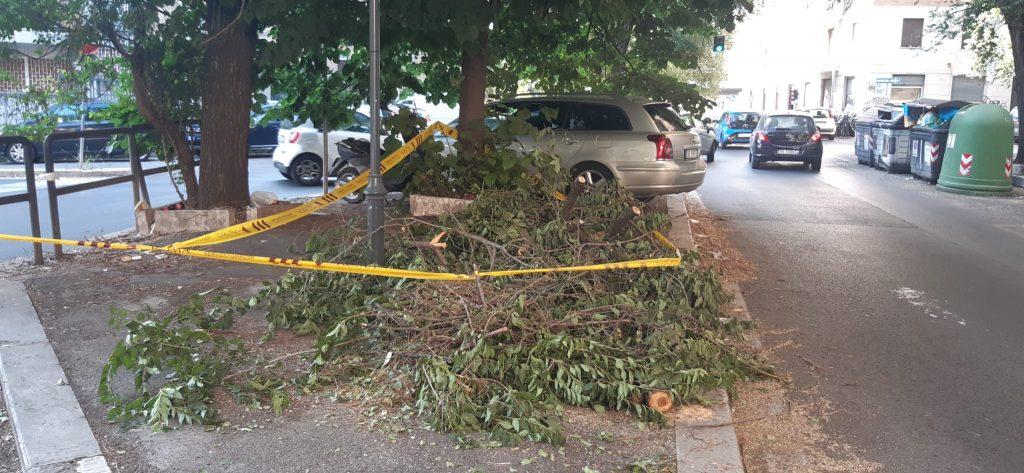 Il ramo caduto a viale Etiopia - foto di Andrea Rollin