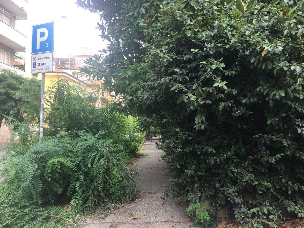 La vegetazione cresce rigogliosa in via Archiano, zona Villa Ada