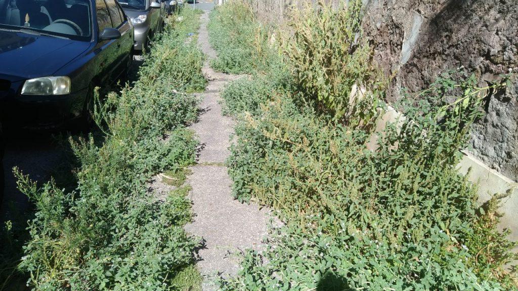 Erbe incolte ostruiscono il passaggio sui marciapiedi di via Annone