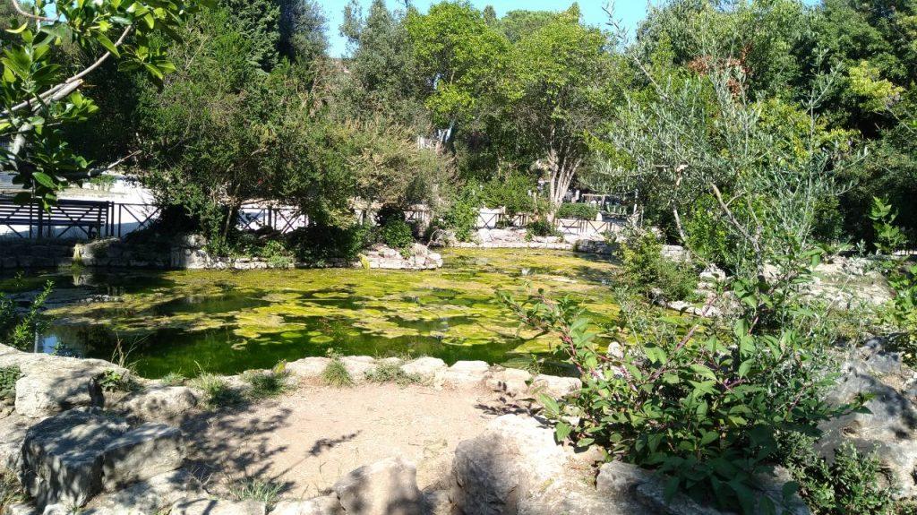Laghetto Parco Nemorense