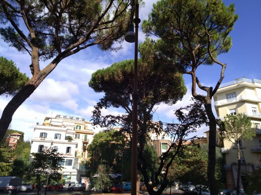 Pini Corso Trieste